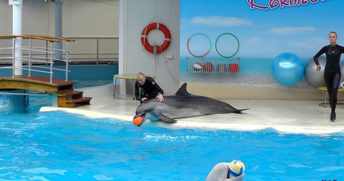 Коктебельский дельфинарий фото 1