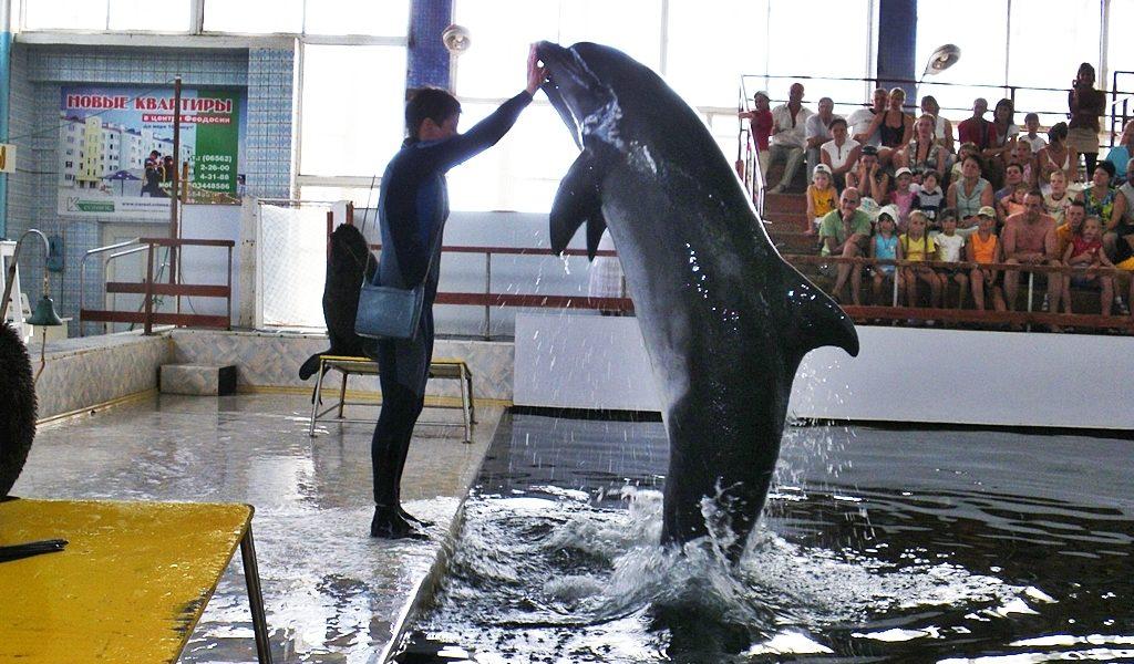 Карадагский дельфинарий фото 1